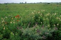 schaefer-prairie-1.jpg